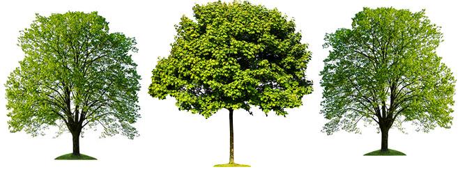 Tree Rebates
