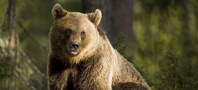 Why Bear Safety Is Important In Fort St. John