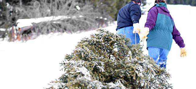 2016 Annual Christmas Tree Pickup Service - January 9th