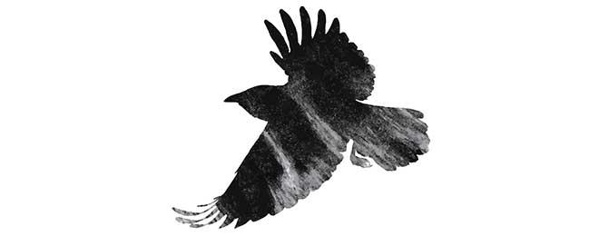 Ravens - June 3rd, 2016